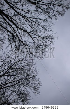 A Tree Branches On The Grey Sky. A Mainly Gloomy Cloudy Day. Looking Up To Grey Sky Through Tree Bra