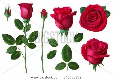 Realistic Rose. Dog-rose Flower Blossom Petals And Buds, Romantic Floral Decoration For Wedding And