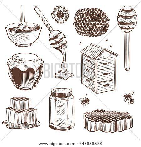 Sketch Honey. Engraved Natural Organic Sweet Food Honey, Pollen And Beeswax, Hive Bee. Beekeeping Et