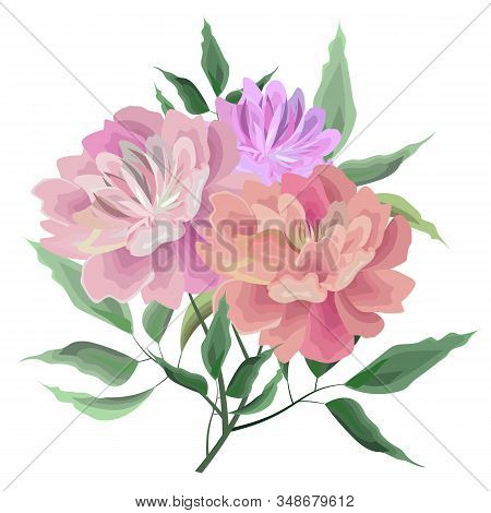 Vector Illustration. Beautiful Branch Of Peonies. Bouquet Of Peonies. Elements For Design. All Eleme