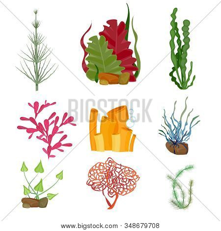 Seaweed. Underwater Ocean Or Sea Plants Marine Botanical Wildlife Cartoon Set. Botanical Underwater