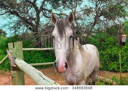 Young arabian horse , equine portrait, summer day outdoors