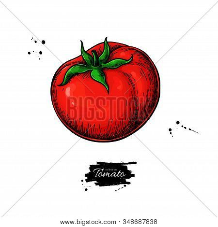 Tomato Vector Drawing. Isolated Tomato And Sliced Piece. Vegetable Illustration.
