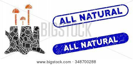 Mosaic Fungus Stump And Rubber Stamp Seals With All Natural Phrase. Mosaic Vector Fungus Stump Is Cr