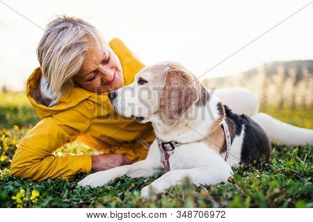 Front View Of Senior Woman Lying On Grass In Spring, Petting Pet Dog.
