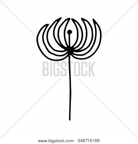 Physalis Manual Contour Drawing.black And White Image.doodles.drawing Of Plants.stylized Image Of Th