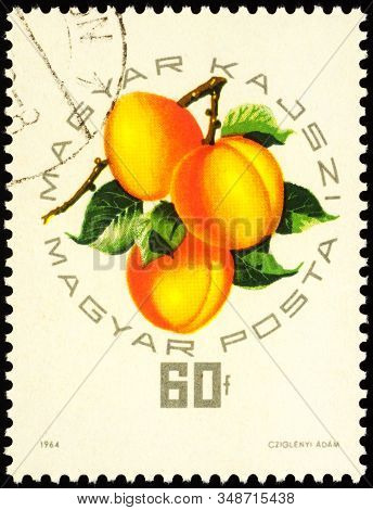 Moscow, Russia - February 02, 2020: Stamp Printed In Hungary Shows Peach Magyar Kajszi, Series