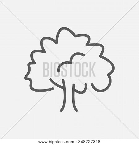 Beech Icon Line Symbol. Isolated Vector Illustration Of Icon Sign Concept For Your Web Site Mobile A