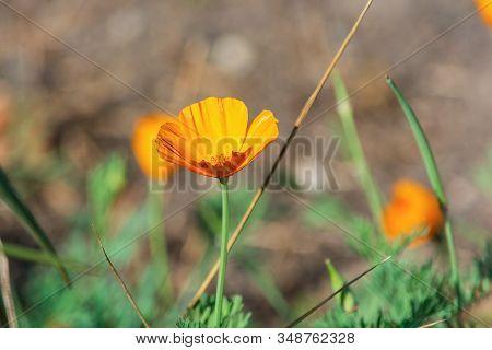 Little Orange Flower. Flora And Fauna. Green Leaves. Summer Plants. Beautiful Flowers. Blurred Backg