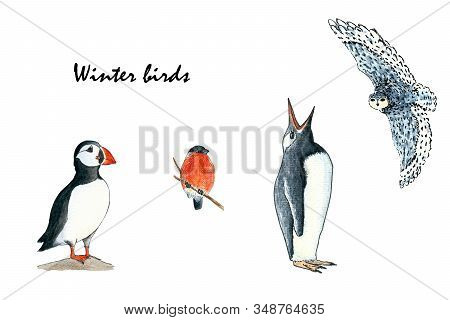 Set Of Birds- Puffin, Bullfinch, Penguin And Owl. Hand Drawing Watercolor Sketch On White Background