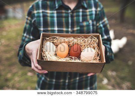 Woman`s Hands Holding A Chicken Eggs Against Of Small Garden With Chickens. Diversity Of Chicken Egg