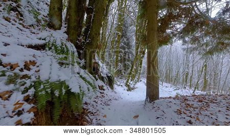 Here We Decided To Take A Walk Through A Very Beautiful Forest On A Nice Winter Day.