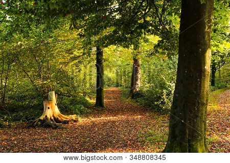 Autumn Setting In A Forrest With Sun Rays. Green Forrest Scene