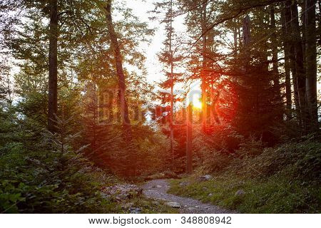 Sunset In Forrest In The Mountains Of Switzerlnd With Sun Rays