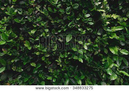 Green Grass Wall Texture For Backdrop Design