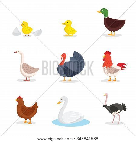Wild Birds And Fowl Flat Illustrations Set. Little Yellow Chick And Egg Shell Isolated Clipart. Dome