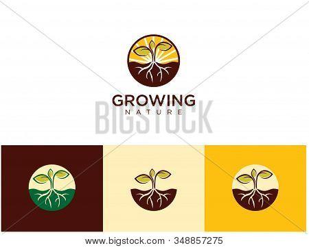 Seed Grow Logo Vector Illustration . Park Seed, Vegetable Seeds, Flower Seeds, Plants, Bulbs, Trees