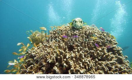 Tropical Fishes And Coral Reef At Diving. Underwater World With Corals And Tropical Fishes. Camiguin