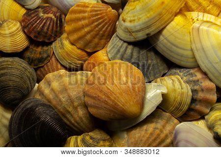 Beautiful Seashells On The Sea. The Texture Of Seashells.seashells Background.