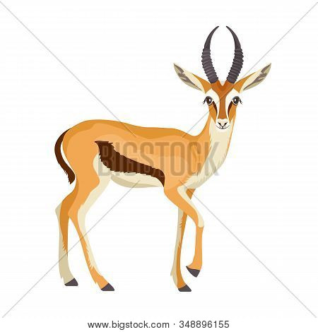 Gazelle Or Antelope With Horn. African Mammal Animal In Wildlife. Vector
