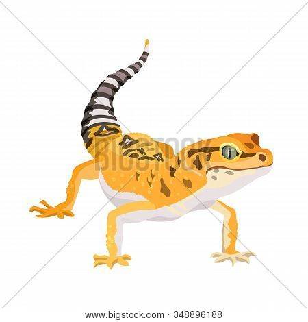 Gecko Lizard Animal. Reptile In Natural Wildlife Isolated In White Background. Vector