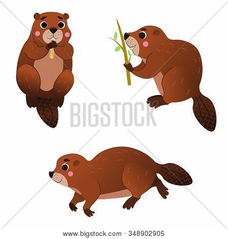 Cute Cartoon Wild Beaver Vector Set. Beaver In Different Postures. Forest Animals For Kids. Isolated