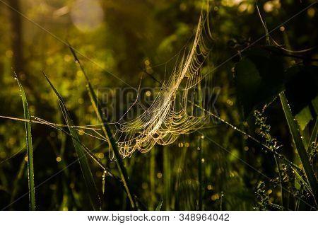 Cobwebs In The Morning Mist. Juicy Greens.