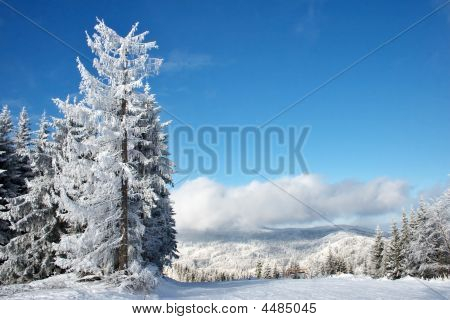 Winter Trees And Clouds