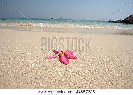 tropical island 13