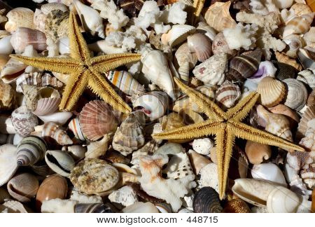 sea shells and sea stars poster