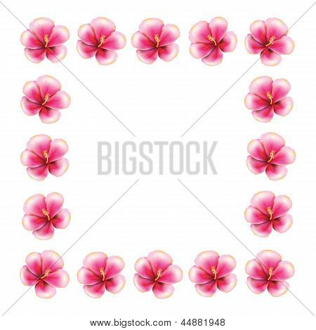 Pink Hibiscus Frame