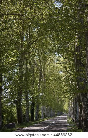 Road Wooded