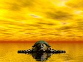 a sea turtle resting on the sea poster