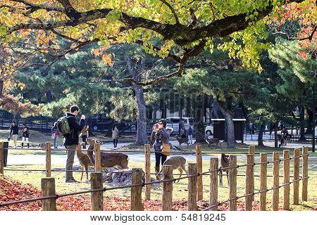Nara is a major tourism destination