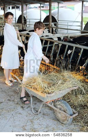 Boy stands near wheelbarrow with hay and woman work next to him in big cow farm. Focus on hay.