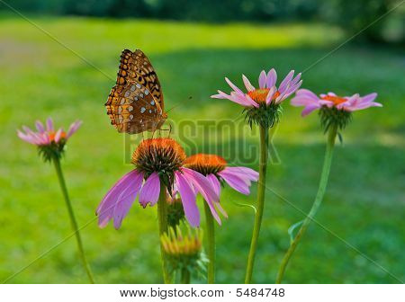 Butterflly On Flower