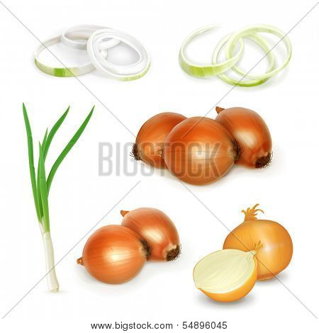 Onion set, vector illustration