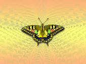 butterfly background colorful. poster
