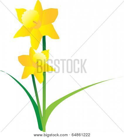 illustration cut out of yellow daffodils