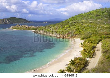 Tropical Shoreline
