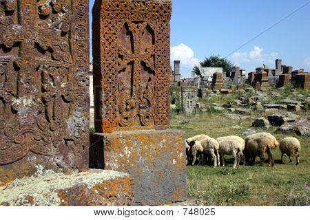 Armenian graveyard with khachkars and sheeps. poster