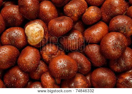 Close up photograph of wet Conkers or Horse Chestnuts