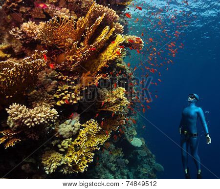 Underwater shot of the lady free diver ascending along the vivid coral reefs. Red Sea, Egypt poster