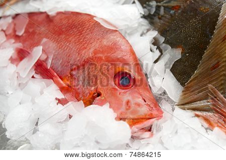 Red snapper on market display, close-up shot