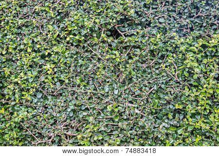Grass Full Frame