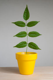 Plant In Yellow Pot