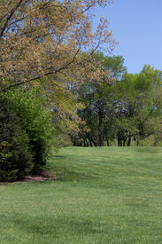 Green meadow with trees