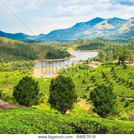 Beautiful Landscape Of Tea Plantation With Mountains And River In India Kerala