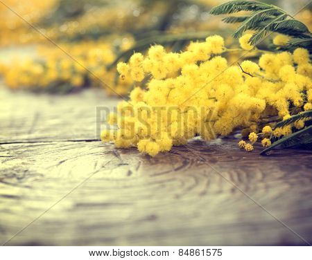 Mimosa spring flowers on the wooden table. Mother's Day or Easter design. Springtime. Toned photo