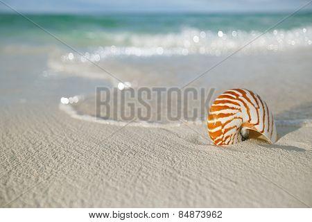 nautilus shell on white beach sand, against sea waves, shallow dof, soft focus